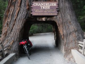 Bicycle and a drive-thru redwood tree